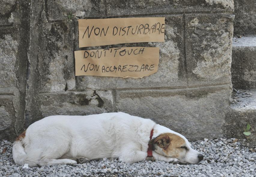 maladie du pancréas chez le chien