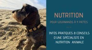veterinaire spécialiste en nutrition
