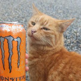 boisson énergisante et chat