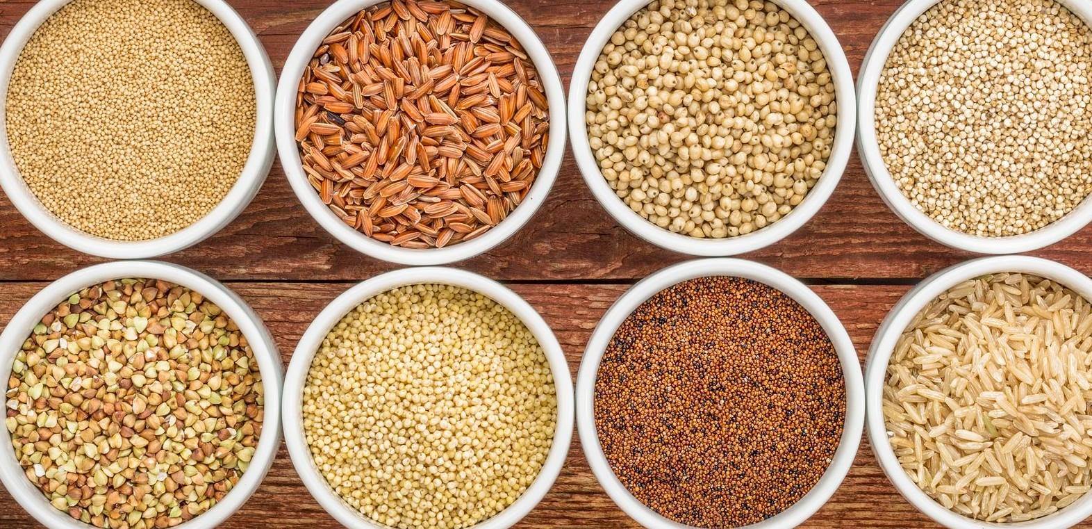céréales dans l'alimentation des chiens et des chats