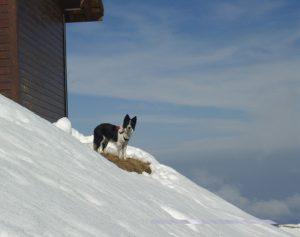 comment alimenter son chien en hiver