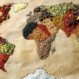 Quelques notions de nutrition humaine…pour éviter l'anthropomorphisme