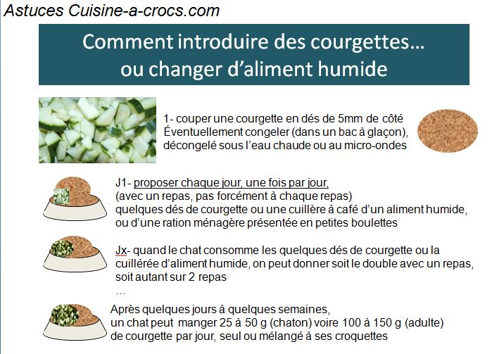 transition alimentaire chat
