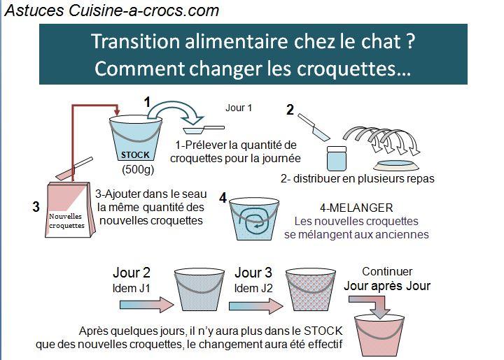 transition croquette-croquette chat