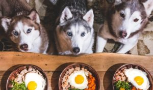 quand nourrir un chien