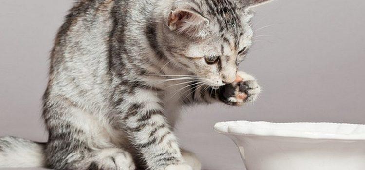 nourrir un chaton