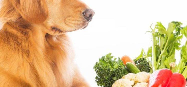 ration ménagère végétarienne