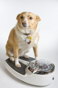 scalesdog350