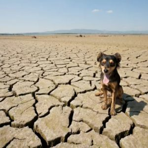 les besoin en eau du chien