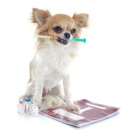 Mon chien est diabétique : comment le nourrir ?