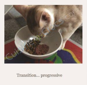 ration ménagère pour un chat