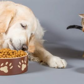 quelle quantité de croquettes pour un chat ou un chien
