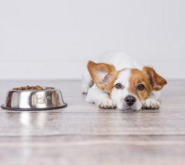 insuffisance rénale et perte d'appétit