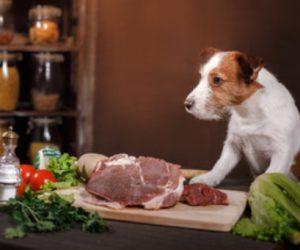 l'alimentation des chiens et des chats