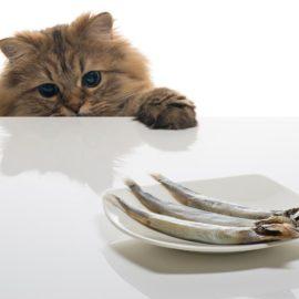 poisson pour un chat