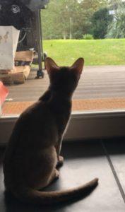 alimentation humide pour réduire la prédation du chat
