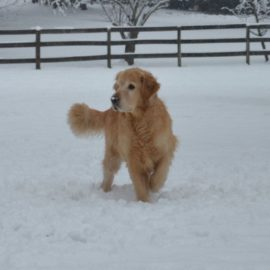 alimenter son chien en hiver