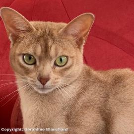 Eviter le surpoids après la stérilisation du chat : est-ce possible ?
