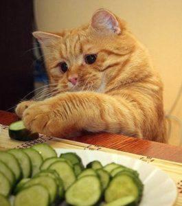 légumes pour les chats