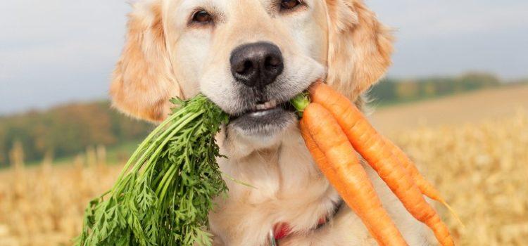donner des légumes à son chien