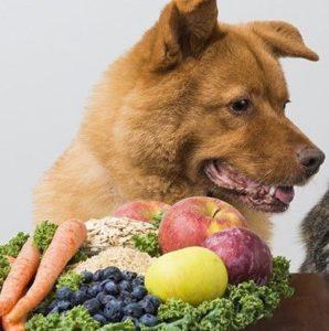 chien végétarien