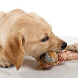 donner des os à son chien