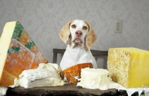 fromage pour le chien